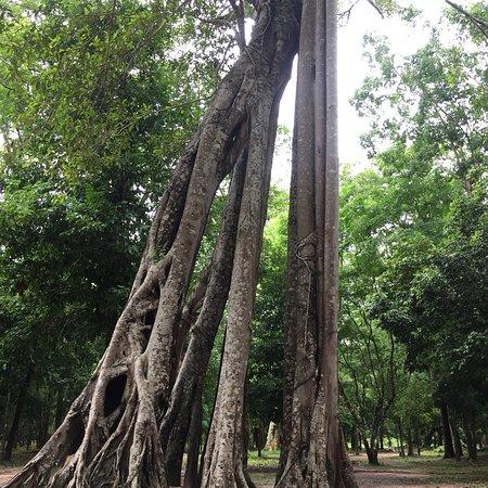 Kampong Thom Province, Kambodża: photo2.jpg