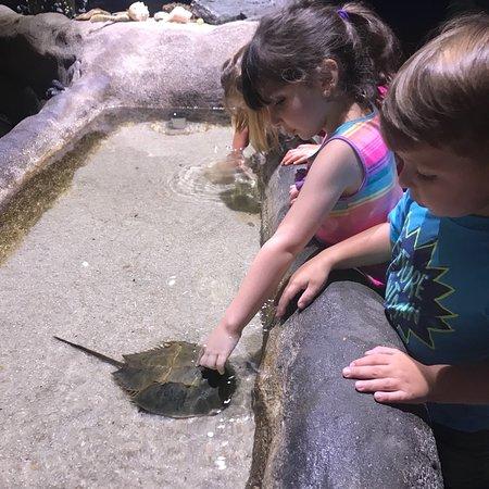 Virginia Aquarium & Marine Science Center: photo1.jpg