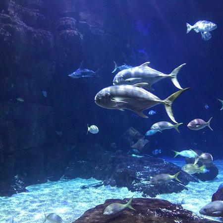 Virginia Aquarium & Marine Science Center: photo2.jpg