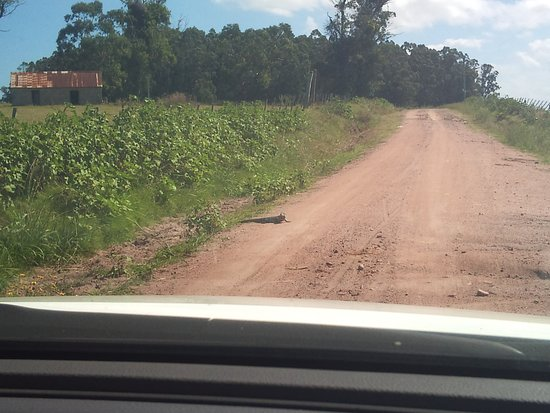 Valizas, Uruguay: Uruguayan Lizard