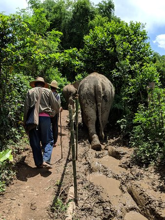 MandaLao Elephant Conservation : Walking with the gentle giants..