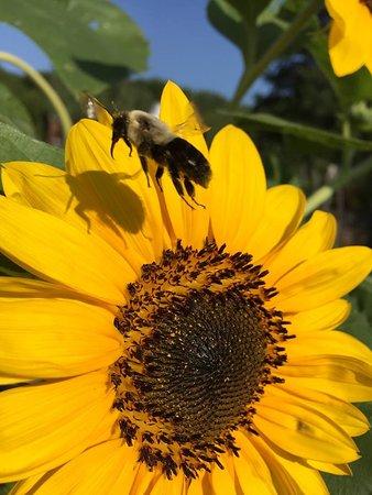 Sussex, Νιού Τζέρσεϊ: A friendly visitor at Earthman Farm