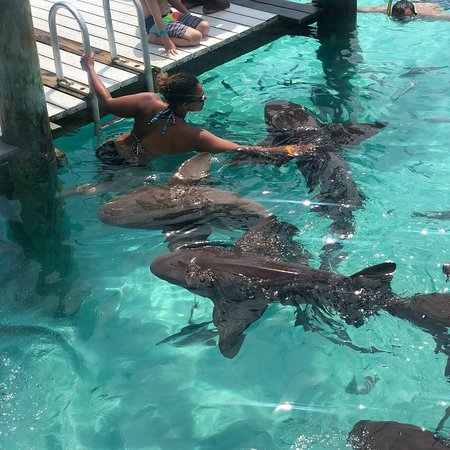 Famous Swimming Pigs Tour Bahamas - Full Day Powerboat to Exuma from Nassau Φωτογραφία