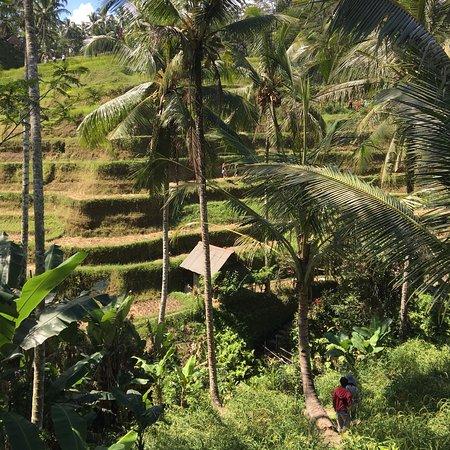 Your Bali Driver (Putu Sudiana) - Day Tours ภาพถ่าย