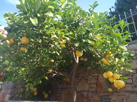 Steni Vala, Greece: very nice garden