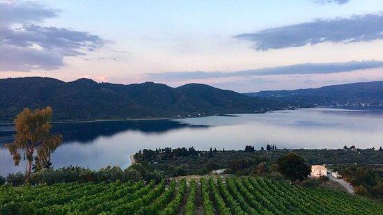 Vriniotis Winery