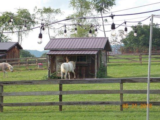 Candler, North Carolina: Barn and horse