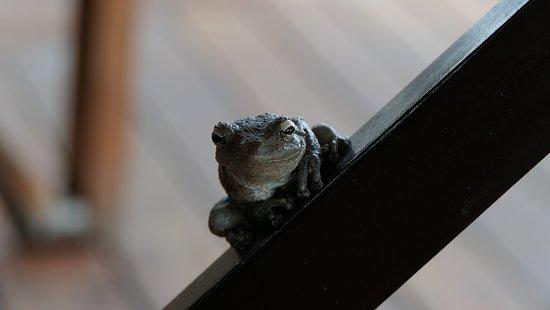 Hwange National Park, Zimbabwe: Kleine Frösche können große Jungs erschrecken... :-)
