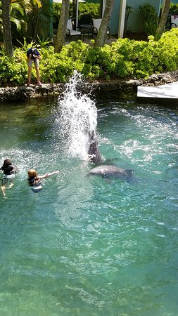 Dolphin Quest: Getting splashed by the dolphins