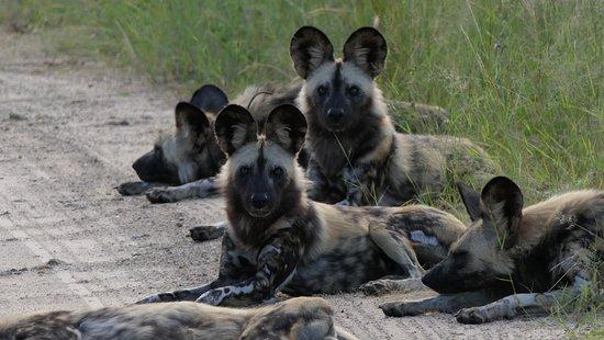 Hwange National Park, Zimbabwe: Danke Ronald... :-)