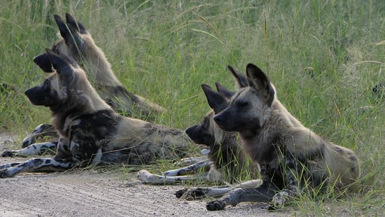 Hwange National Park, Zimbabwe: .... und Danke Luis für die ausdauernde und dann rasante Fahrt!