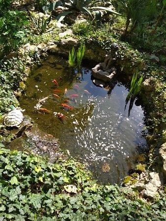 Morskoi Briz: Бассейн с рыбками