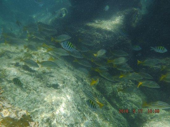 Loreto Guide with Said Orozco: Snorkeling