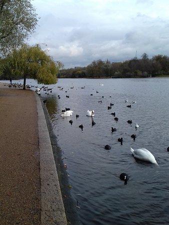 ไฮด์ปาร์ค: прекрасное озеро в парке