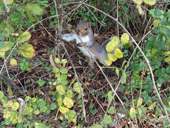 Hyde Park: вам всегда рады здесь, ососбенно с горсткой орешков