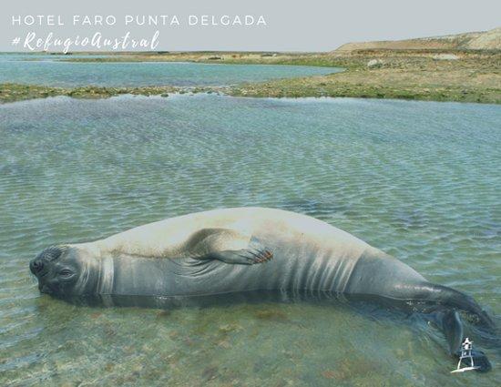 Punta Delgada Photo
