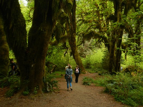 Experience Olympic Tours: This photo was taken during our hike in the HOH Rainforest.