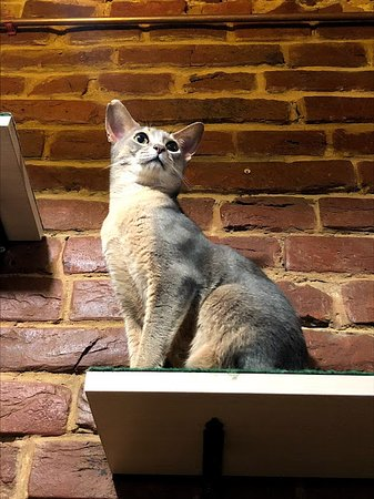Cat Cafe: Котейка