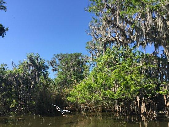Black Hammock Adventures: Cypress and heron