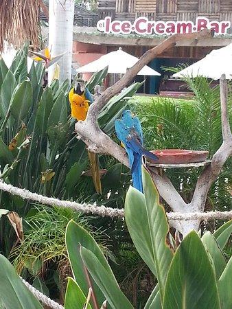 Ventura Park: bentura park cancun