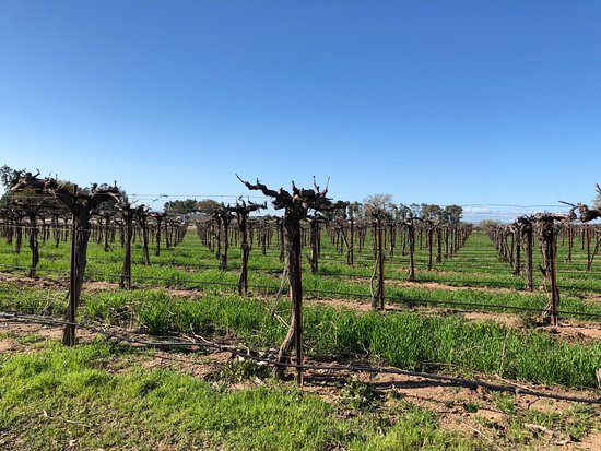 Mitchella Vineyard & Winery: Perfect Day for Wine Tasting in Paso.