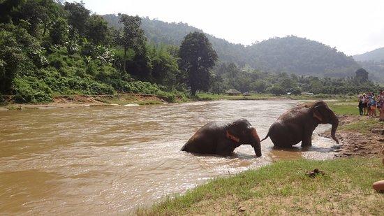 Elephant Nature Park: Elefantes jugando