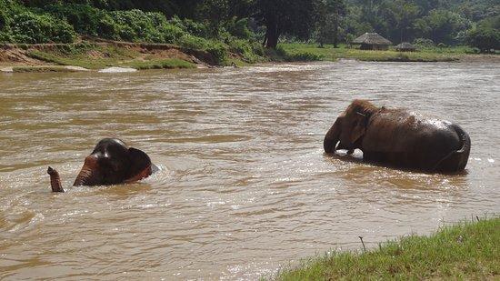 大象自然保护公园照片