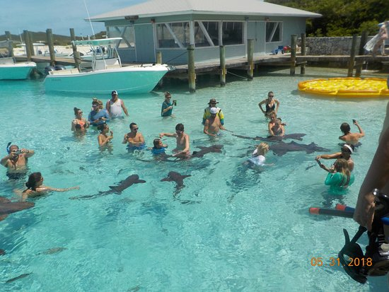 Sugar Adventure Company-Day Boat Tours: swimming with the sharks