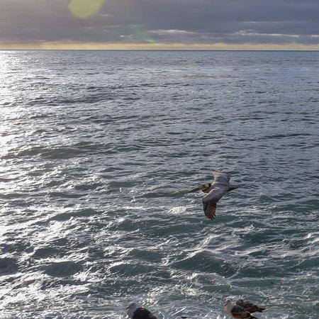 拉荷亚海岸照片