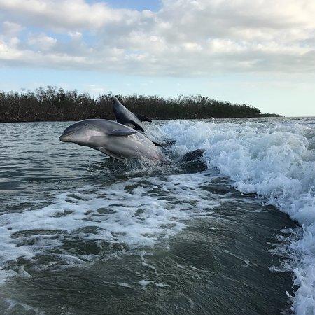 Dreamlander Tours : Dolphin Friends