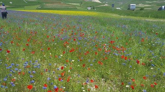 Castelluccio di Norcia, Italien: 20180603_125723_large.jpg