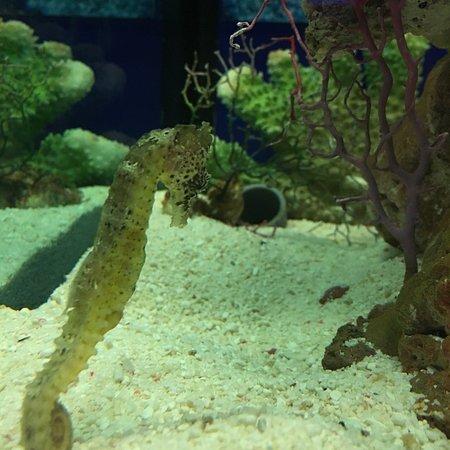 吉隆坡城中城水族馆照片