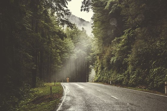 NZ-Tours: Conuntry road