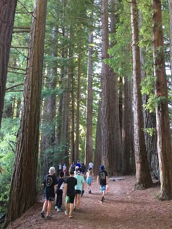 Mount Maunganui, New Zealand: A group walking to the Hamurana Spring