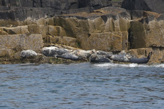 Osprey of Anstruther Day Tours: Seals Bathing
