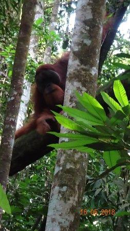 Thomas Jungle Tours : Big one