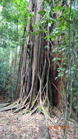 Thomas Jungle Tours : Jungle