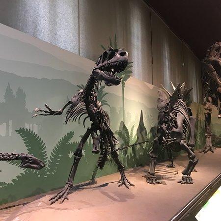 Foto de Civico Museo di Storia Naturale