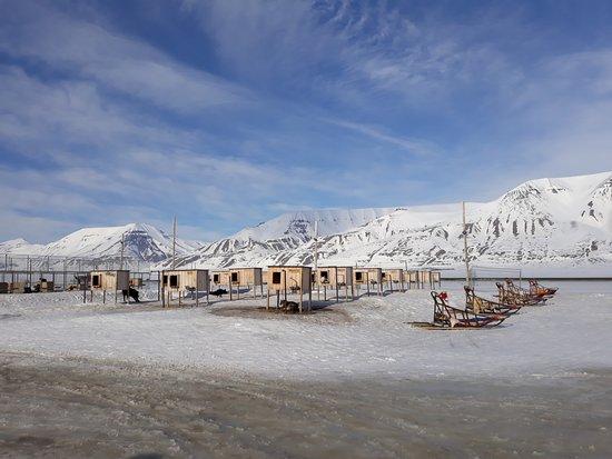 Svalbard Husky: The kennel