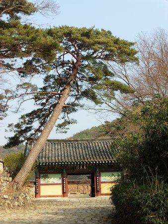 Gyeongju City Tour: Cartoline da Gyeongju, Corea del Sud