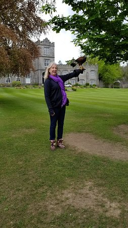 Dublin Falconry: me and hawk