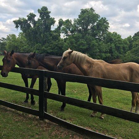 Boone Hall Plantation ภาพถ่าย