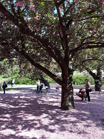 Brooklyn botanic garden 2018 all you need to know before - Brooklyn botanical garden free admission ...