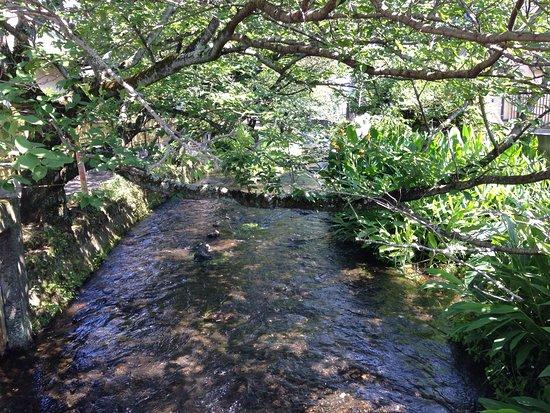 Gempeigawa River: 源兵衛川