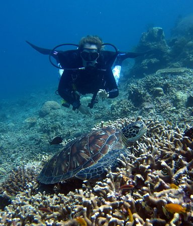 AivyMaes Divers Dauin : Our friend turtle