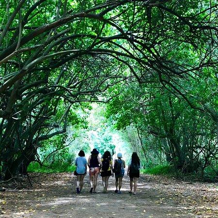 Escape Waikiki Tours Photo