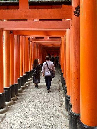 ศาลเจ้าฟูชิมิ อินาริ: So many gates!