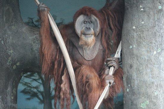 Birmingham Zoo: My Favorite Animal and photo