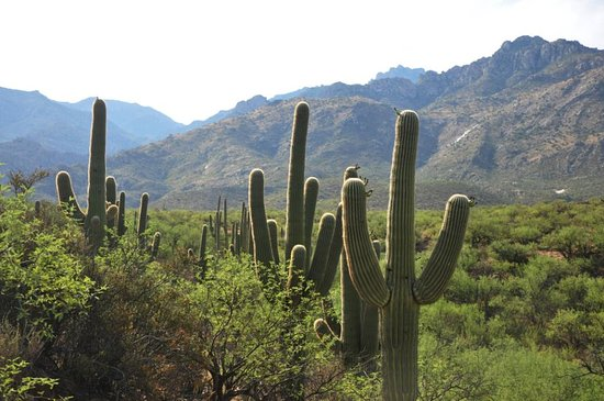 Catalina State Park : The view during the hike