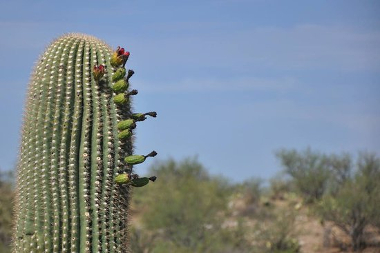 Catalina State Park: The view during the hike